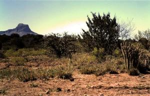 Chihuahua woestijn in de omgeving van Alpine, Texas