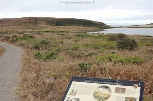 Duinen langs de Pacifische Oceaan in Marin County; typisch habitat T.e.terrestris red morph.
