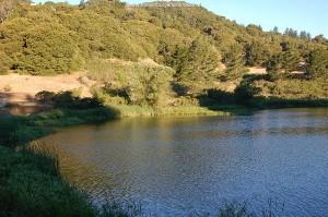 Biotoop van T.e.terretris in juli, een meertje in de de heuvels van San Mateo County.