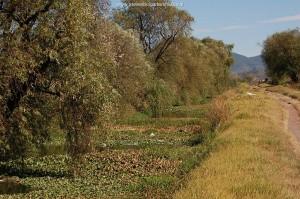 Kanaal rondom Zacapu, biotoop van Thamnophis eques insperatus in november 2008.