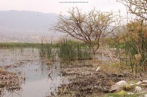 Biotoop van Thamnophis melanogaster canescens: het meer van Cajititlan, Jalisco, Mexico.