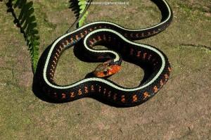 Baby slang 4 maanden oud.