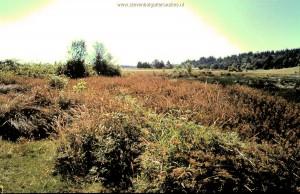 Habitat T.s.concinnus; Overzicht moeras en omgeving (Willamette valley, Oregon).