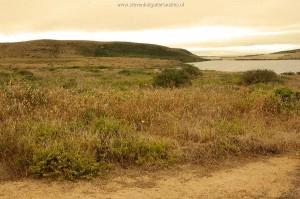 Natuurlijk habitat van T.s.infernalis in Marin County.