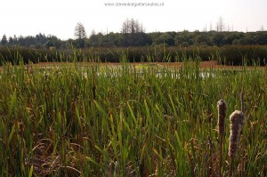 Natuurlijk habitat van T.s.infernalis in Sonoma County.