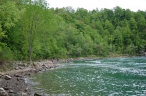 Habitat T.s.sirtalis en Nerodia sipedon sipedon nabij de Niagara watervallen, Ontario Canada