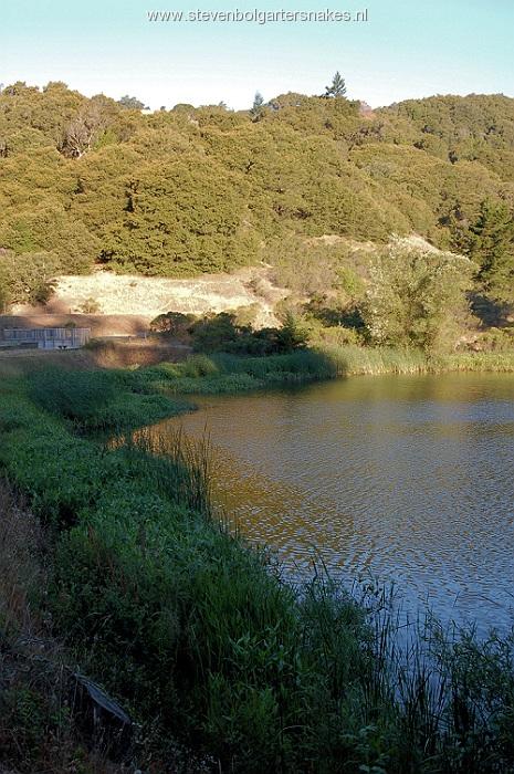 Biotoop van T.a.atratus en T.e.terrstris in San Mateo County, Ca. Zon schijnt in juli vanaf 7.30 uur op de oever waar de slangen liggen te zonnen