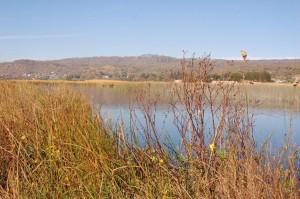 Laguna de Zacapu, biotoop van Thamnophis eques insperatus in november 2008.