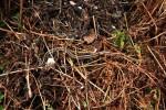 Thamnophis radix vrouw kruipt tevoorschijn om 10 uur 's morgens op 3 april.