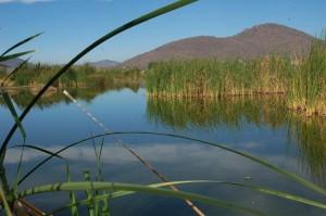 Cajititlan meer, westelijke kant van het meer waar er veel riet groeit