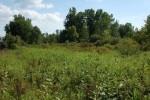 "Habitat van T. butleri in Michigan in Augustus; ""prairie met hoog gras"""
