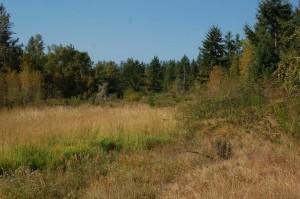 Een open plek met een drooggevallen kreekje in het bos in de heuvels van Washington, USA; habitat van T.ordinoides en T.s.pickeringii (blauwe variant)