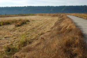 Habitat van T.s.pickeringii (blauwe variant) in Washington (midden van september)