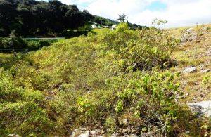 Habitat van Thamnophis conanti
