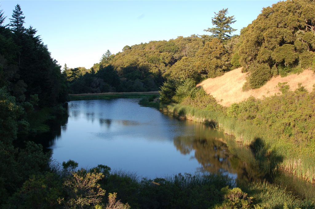 Biotoop van T.a.atratus in San Mateo County in Californie...